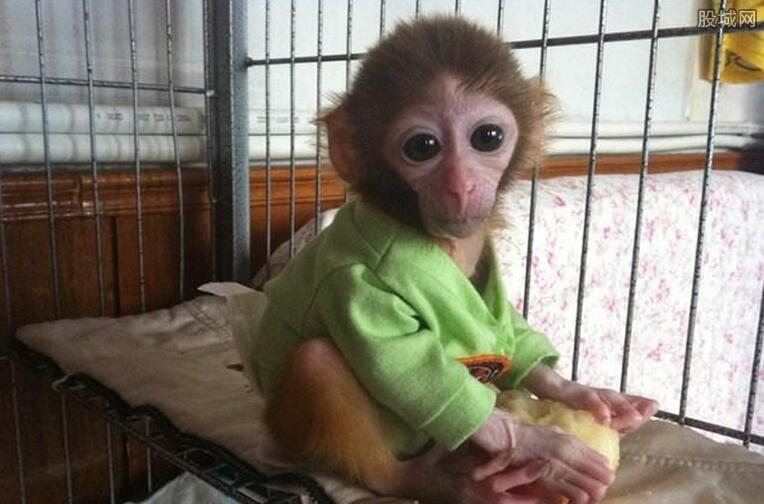 宠物猴多少钱一只