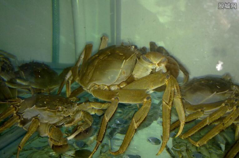 大闸蟹多少钱