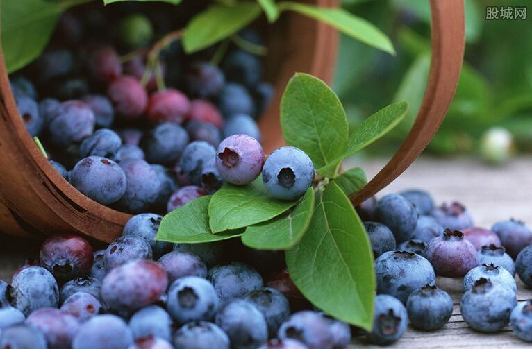 蓝莓为什么那么贵
