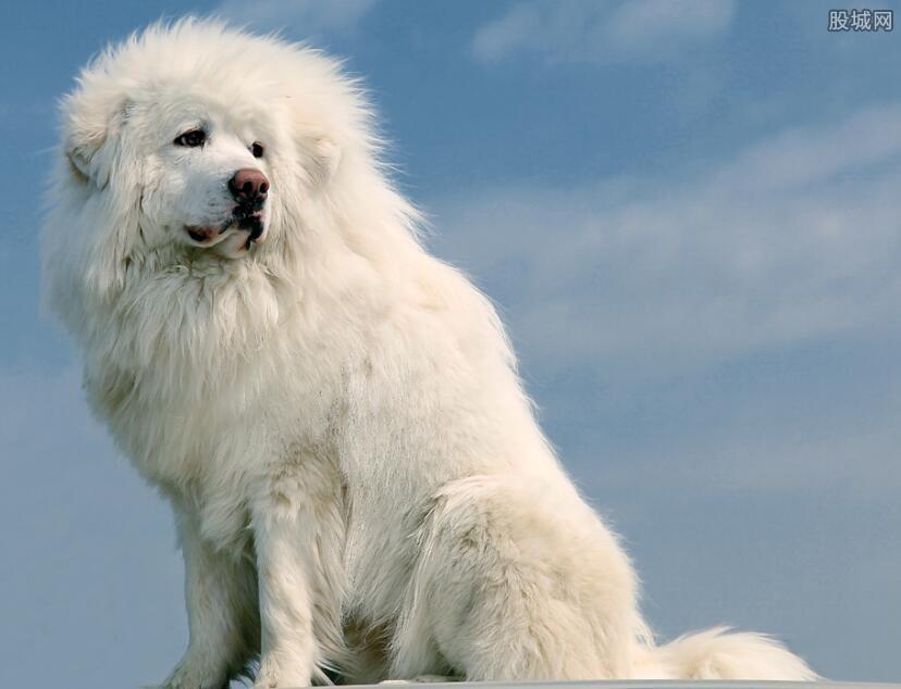 世界上最贵的狗排名
