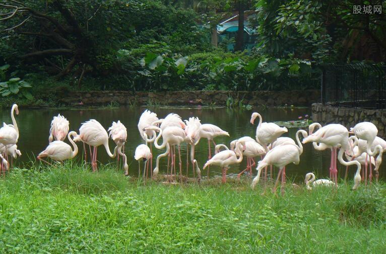 广州动物园门票