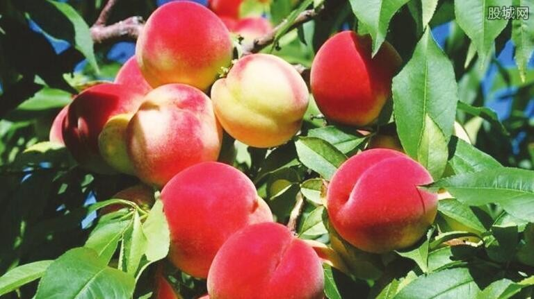 新鲜水果网购哪家好 网购水果有哪些不足之处