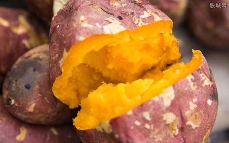 红薯价格最新行情