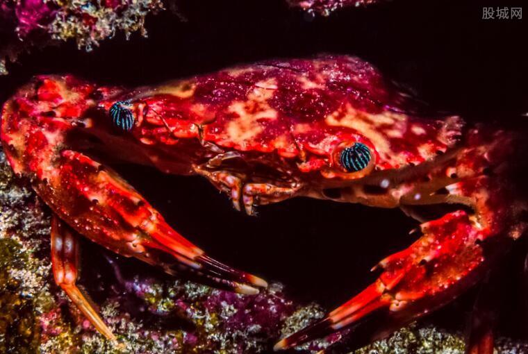 数百万红蟹横行