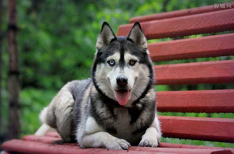 宠物狗品种及价格