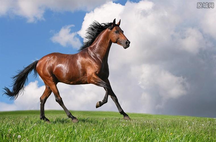 一匹马的市场价格
