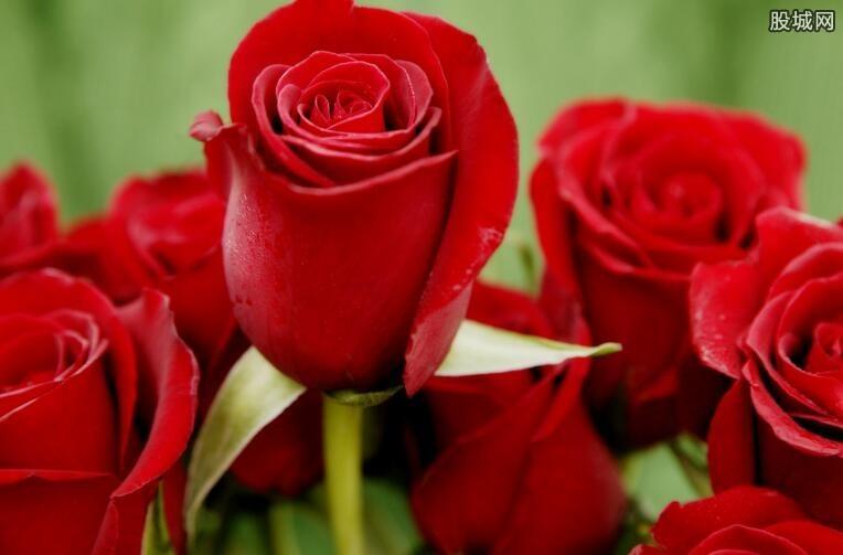 情人节玫瑰花会涨价吗