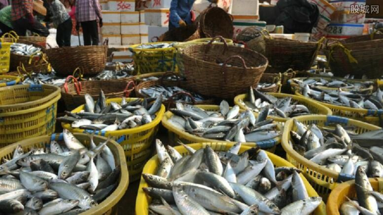 怎么判断鱼是否新鲜