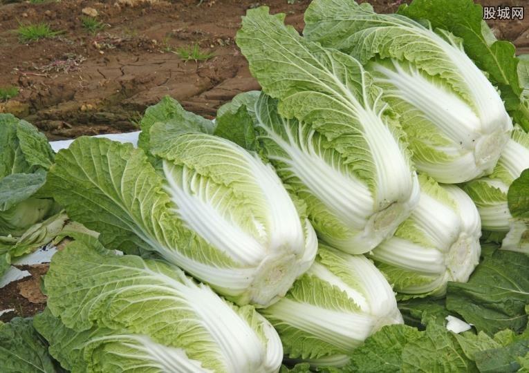 韩国蔬菜价格飙升