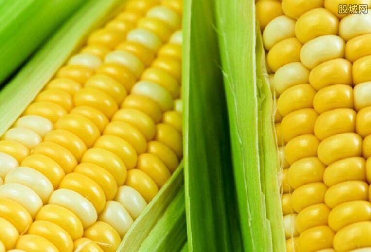 河南玉米最新价格