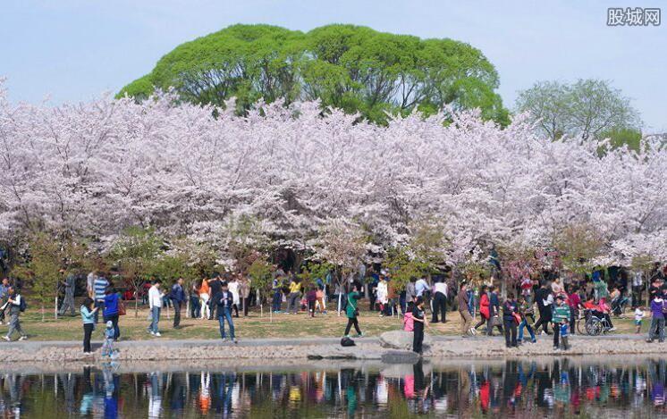国内去哪里看樱花