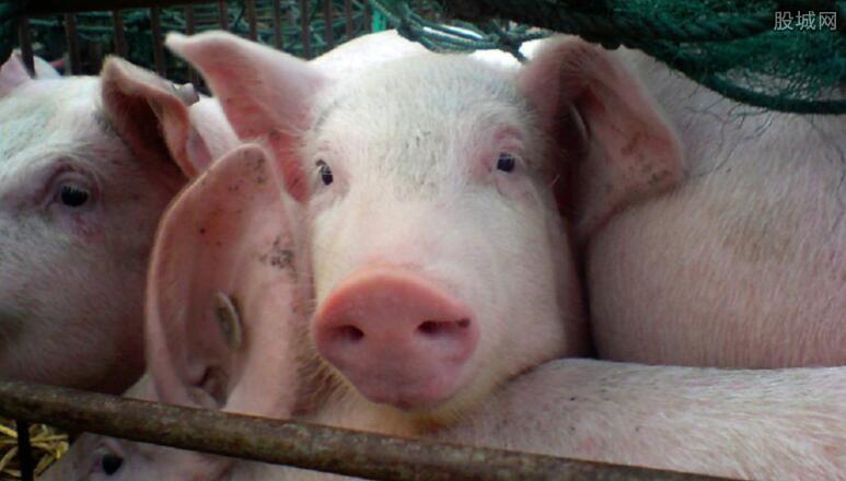 养猪有补贴吗