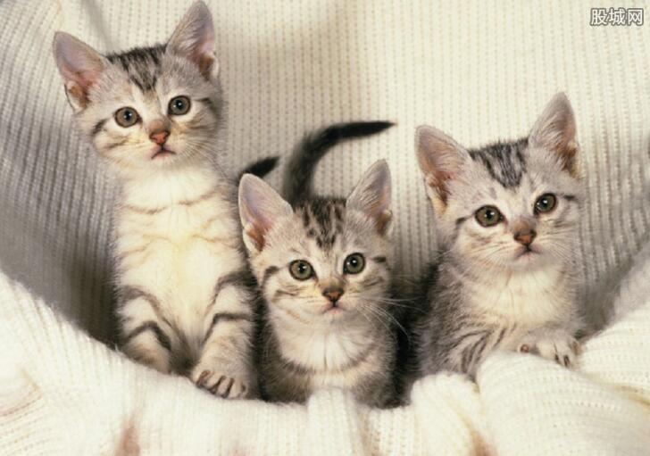 花费数千元治疗小猫