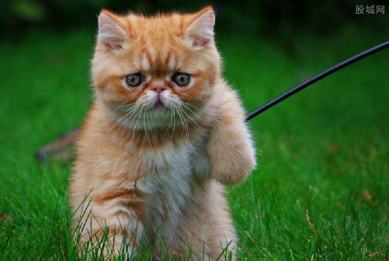 微信购布偶猫却收到病瘟猫