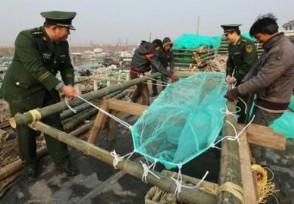 非法捕捞长江鳗鱼苗 出售牟利近千万元被抓获