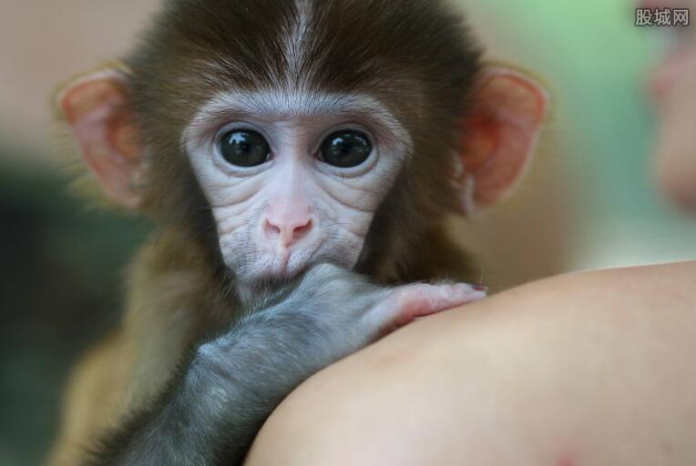 跨境购100多只猴子售卖 宠物店老板和买者获刑