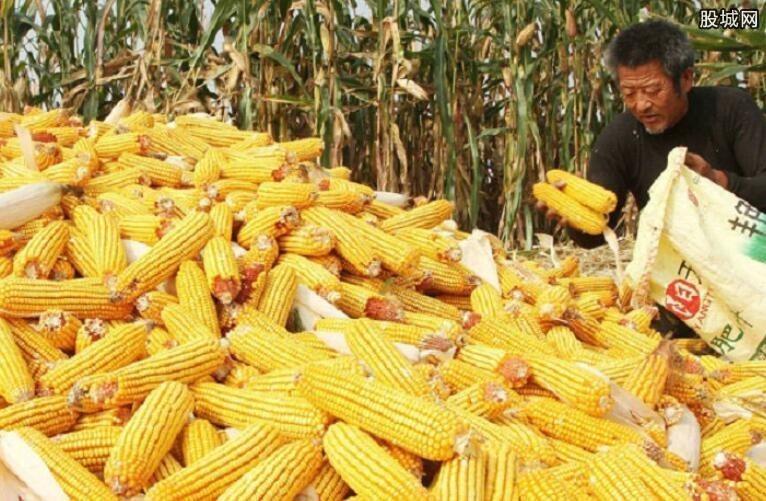 玉米价格走势如何