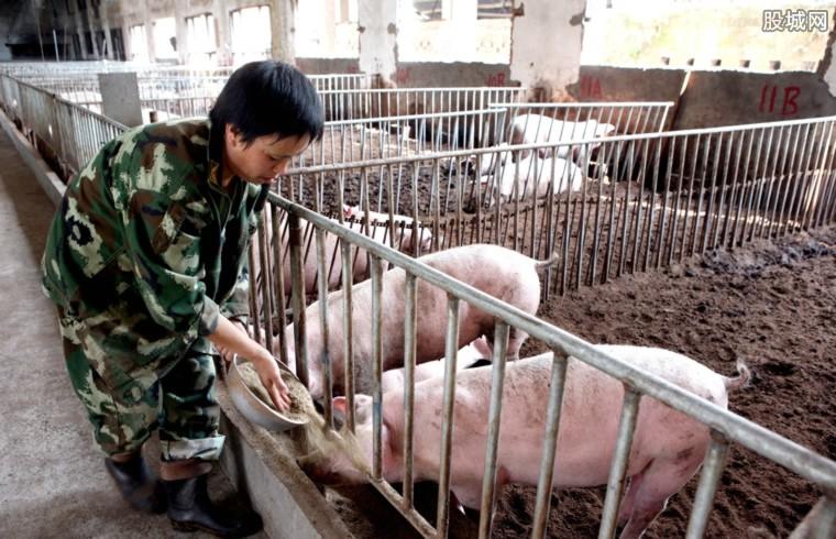 猪价持续下跌