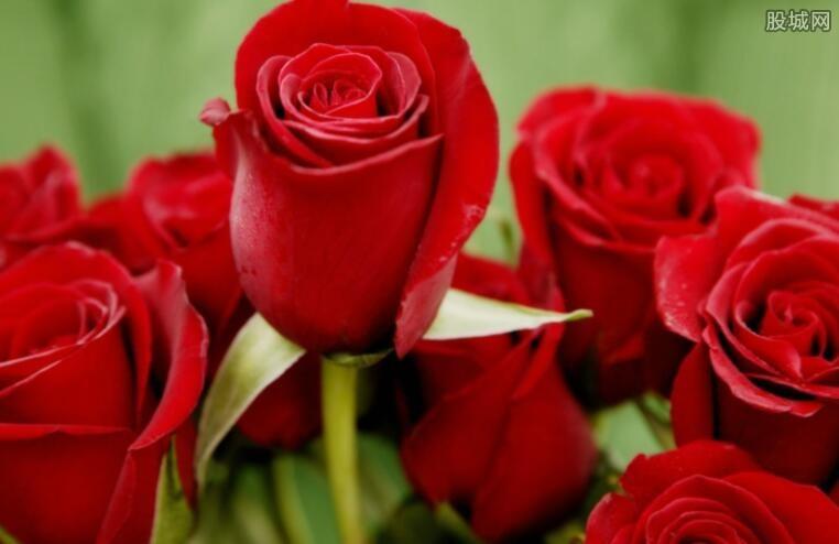 七夕卖花日入10万 七夕玫瑰花多少钱一枝