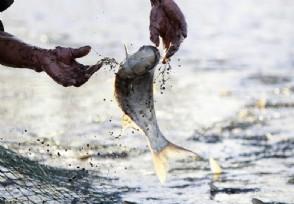 上海食药监抽检:乐购黑鱼等10批次水产品不合格