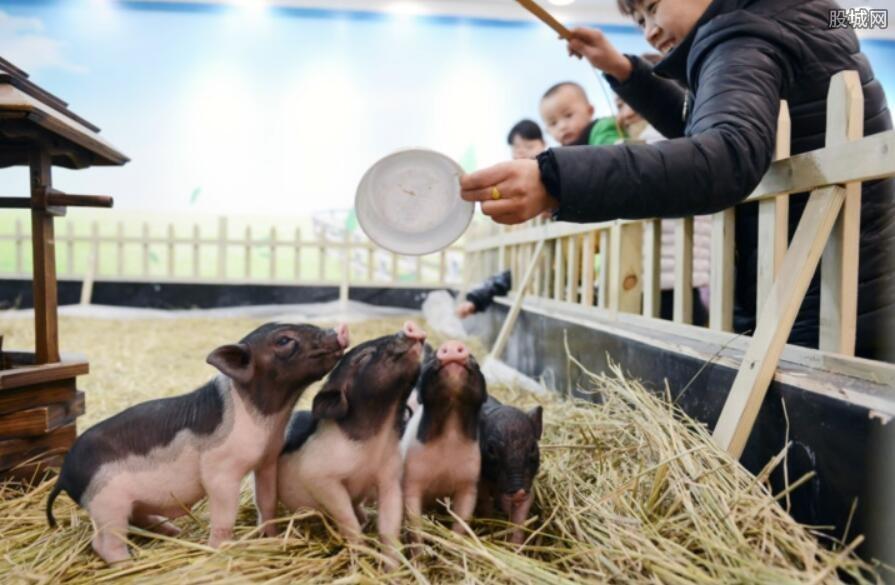 小香猪多少钱