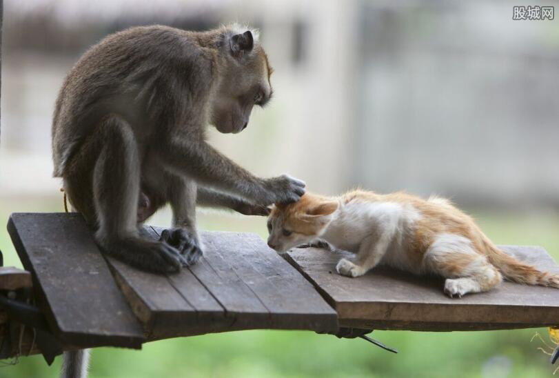 宠物猴子多少钱