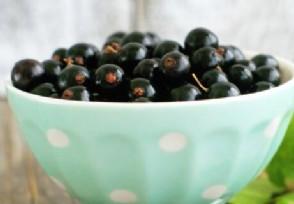 黑加仑多少钱一斤 吃黑加仑的营养功效都有哪些