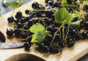黑加仑泡水喝有什么好处 黑加仑的价格多少钱一斤