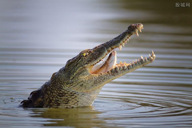 卖鳄鱼烤肉生意火爆