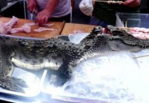 游客抢食烤鳄鱼 鳄鱼肉丸售价每公斤300泰铢