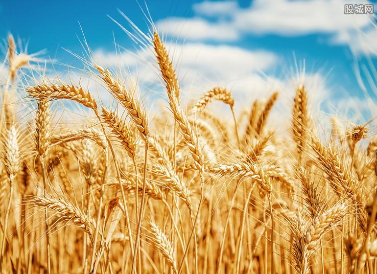 小麦价格多少
