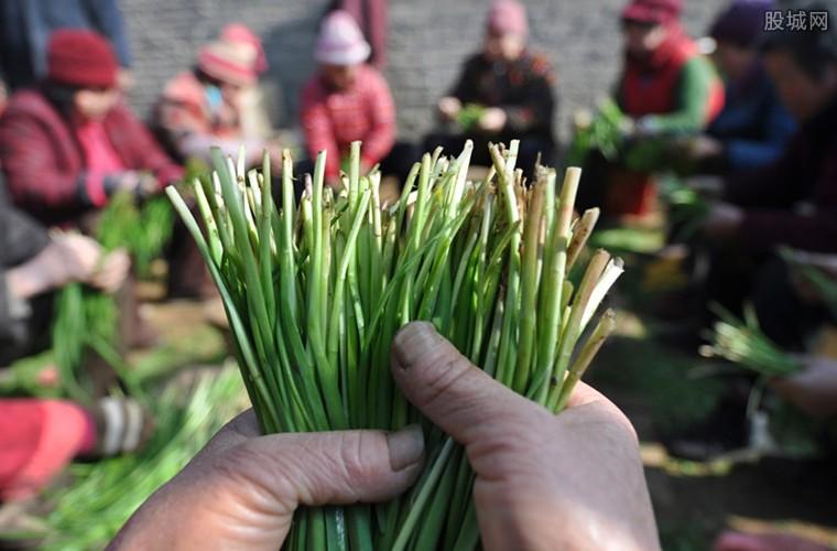 日本蔬菜受灾短缺
