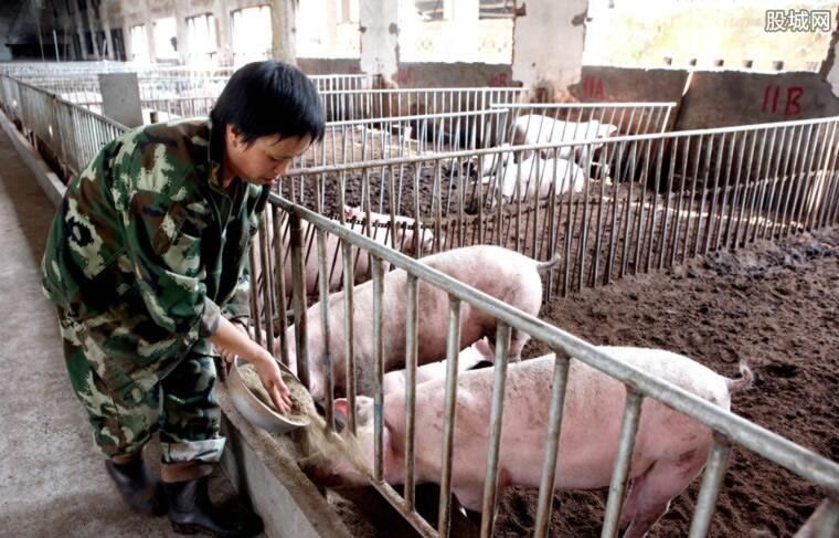 生猪价格最新走势
