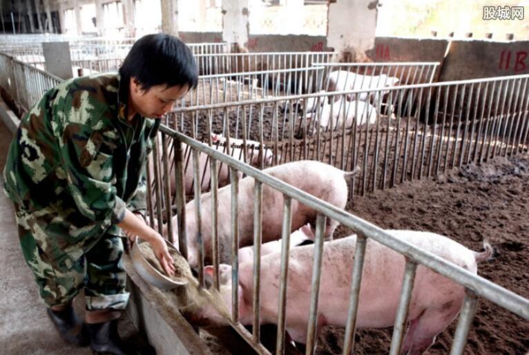 猪价行情持续稳中震荡