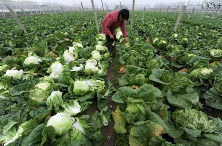 十一月蔬菜价格大跳水