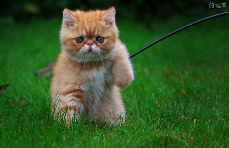 猫皮马甲真的有吗