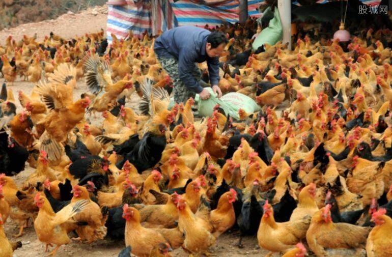 鸡产品处全线上涨状态