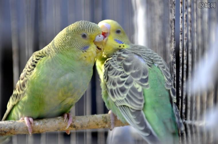 鹦鹉是保护动物吗