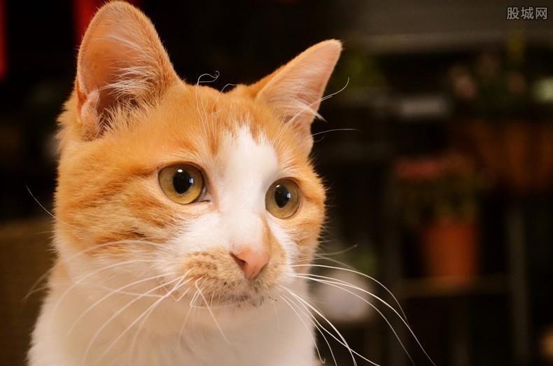 橘猫为什么那么胖