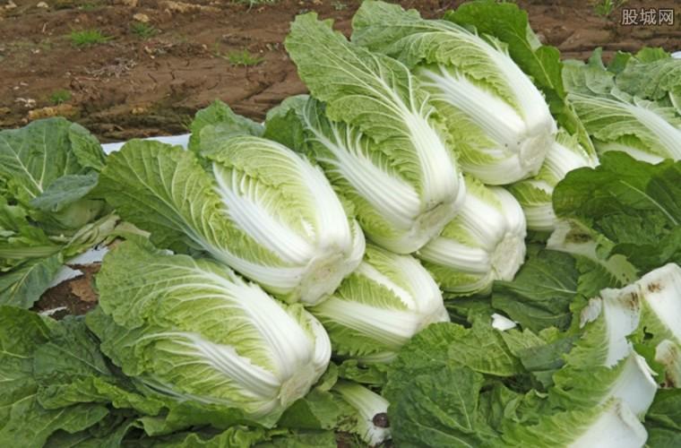蔬菜价格上涨原因