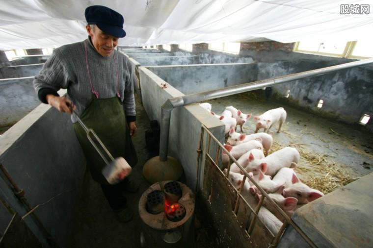 春节前猪价会涨价吗