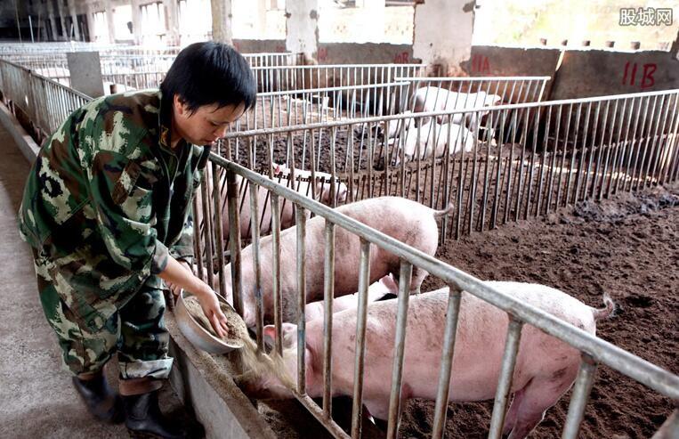 生猪价格最新行情
