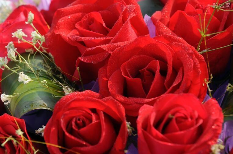 玫瑰花贵吗