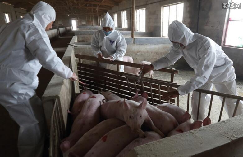 山东首例非洲猪瘟疫情 已启动应急响应有效处置
