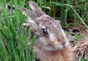 吓死兔子赔44万 法院判决赔偿的原因是什么?