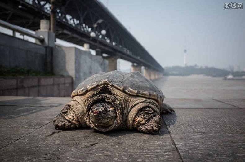 鳄龟价格多少