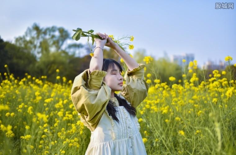 游客哄抢展览花 官方声明称其为景观道具假花