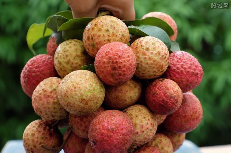 荔枝多少钱一斤