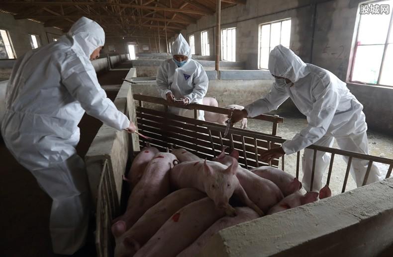 猪瘟疫情变化