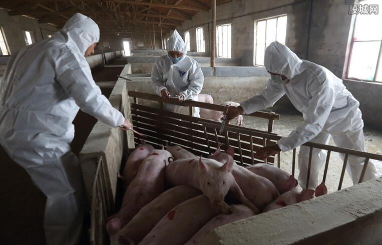 猪瘟疫情消息